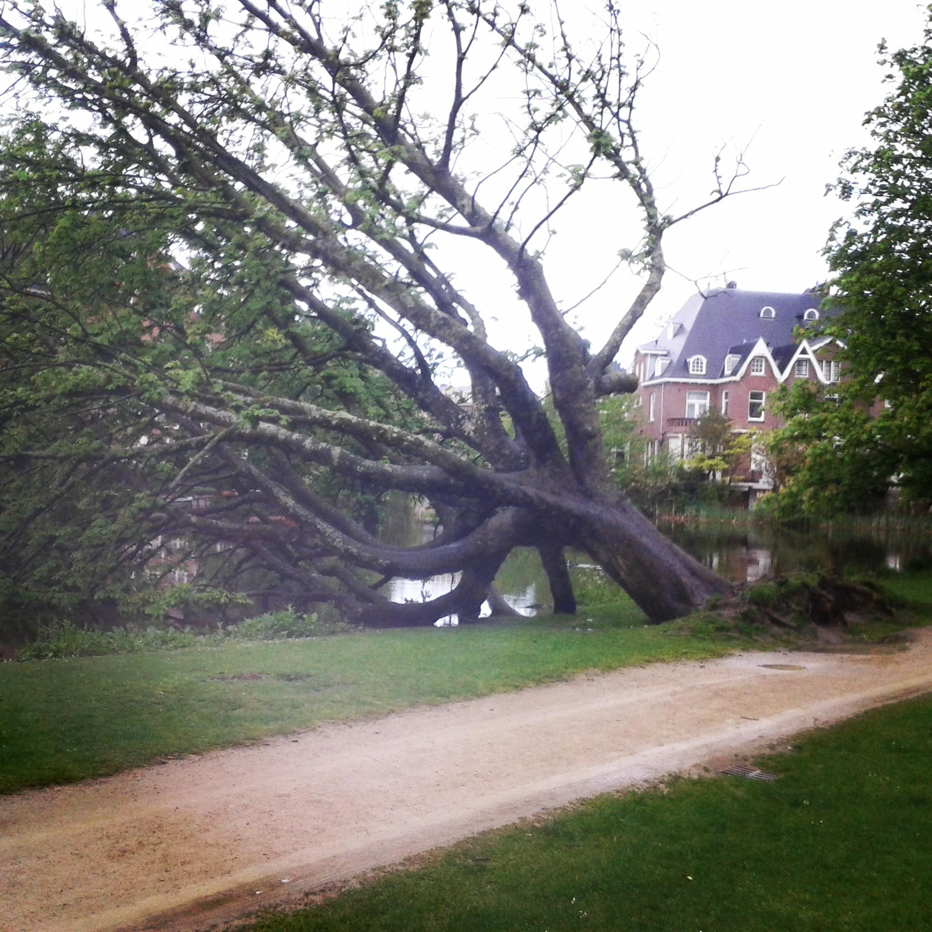 Träd i Vondelpark
